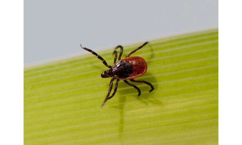 Lyme disease researchers seek consensus as number of cases grows