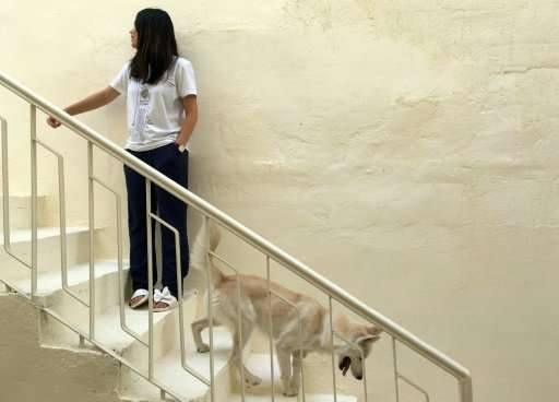 """Majnoona, a 11-month-old dog that lost her leg during a car accident, is one of the success stories of Baghdad's """"animal ad"""
