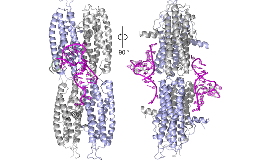 Major advance in the understanding of the transport of RNA