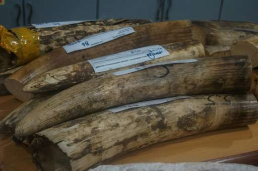 Malaysian authorities found 23 ivory tusks in a raid at Kuala Lumpur airport