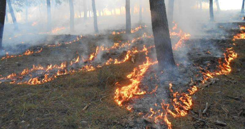 Managing bushfires for safety and biodiversity
