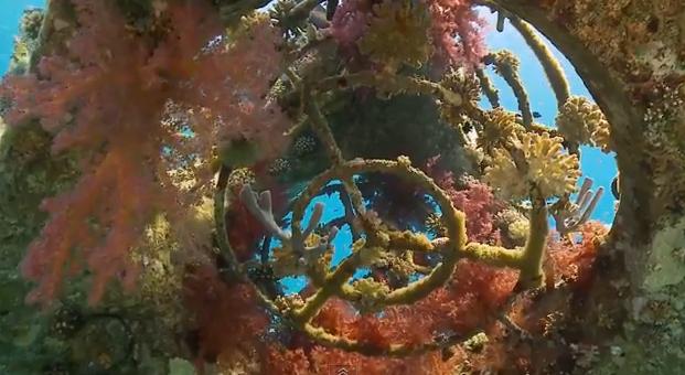 Man-made reefs: A compelling diving alternative -- Ben-Gurion U. study