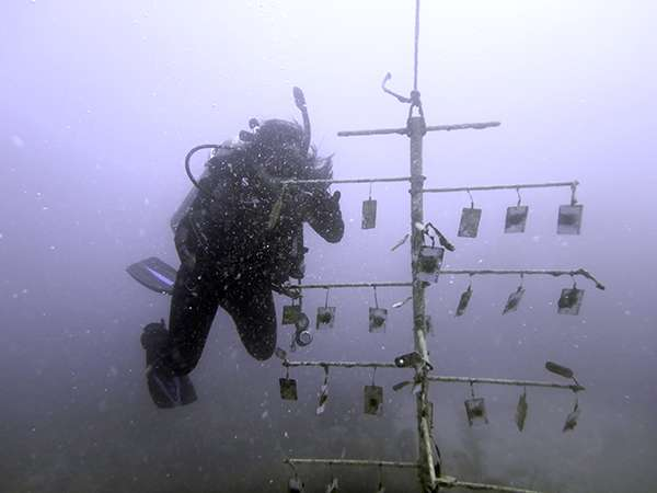 Marine scientists and astronauts join forces to create world's deepest coral nursery