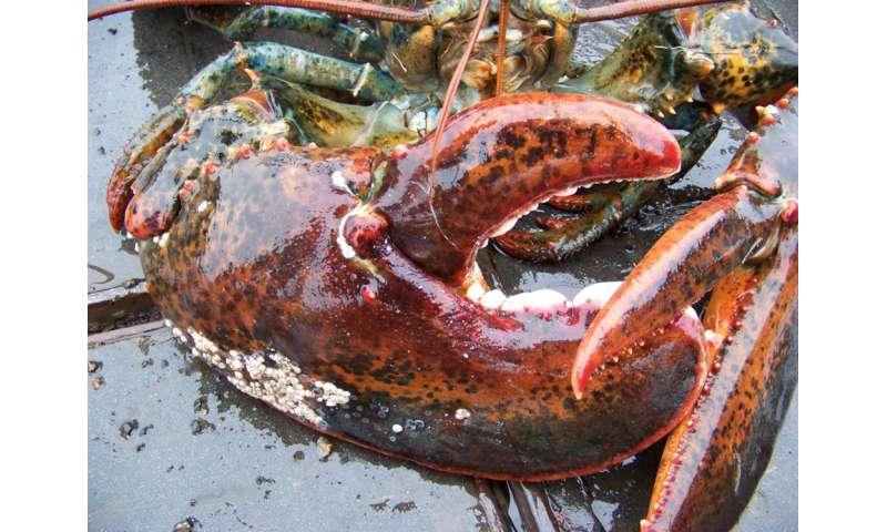 Marine species distribution shifts will continue under ocean warming