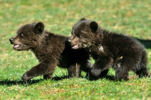 Masha and Brundo were probably orphaned when a hunter killed their mother