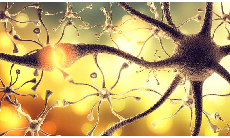 'Maturity' molecule helps adolescent brain grow up