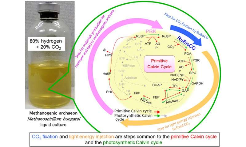 Mechanism for photosynthesis already existed in primeval microbe