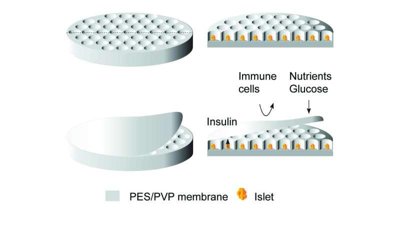 Membrane for islets of Langerhans transplantations