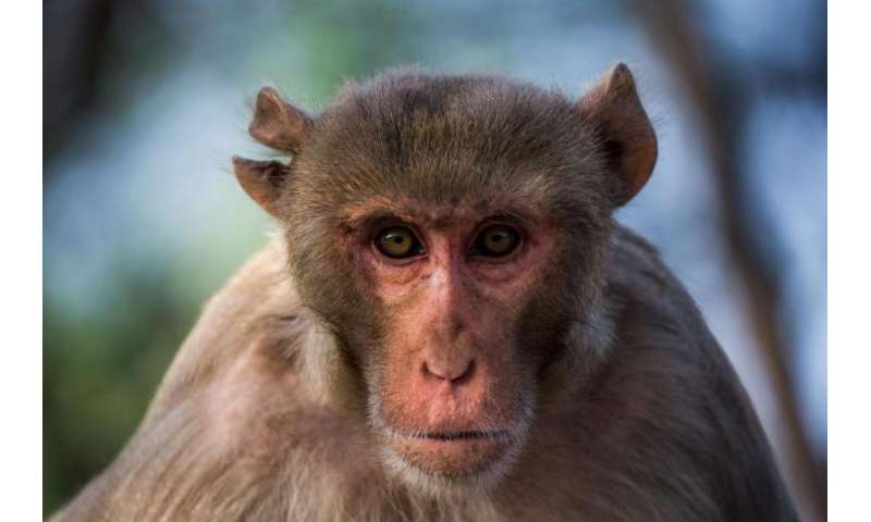 Memory for stimulus sequences distinguishes humans from other animals