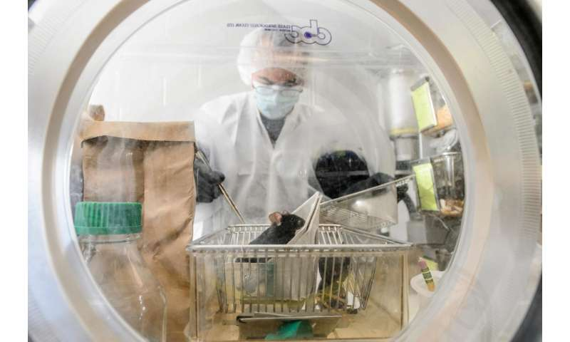Microbes compete for nutrients, affect metabolism, development in mice