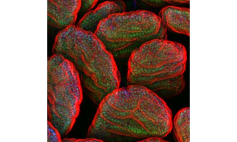 Microbes seen controlling action of host's genes
