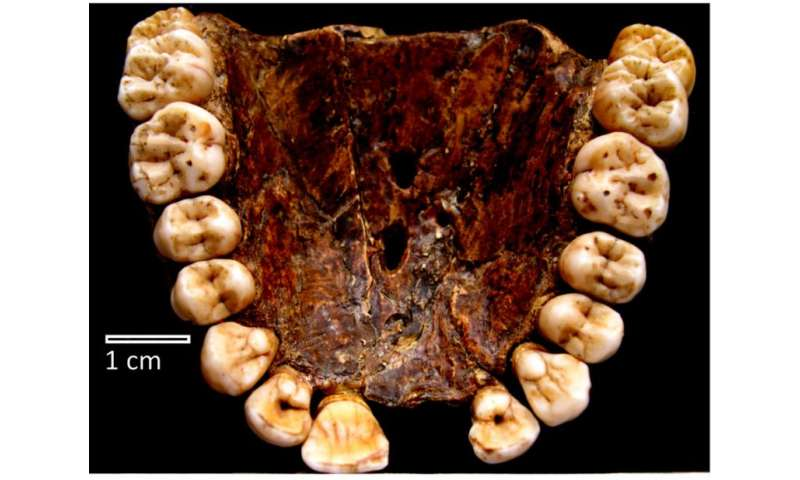 Millions of years of evolutionary history recorded in teeth