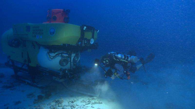 Mānoa: Hundreds of species of fungi in deep coral ecosystems discovered by UH Manoa botanists