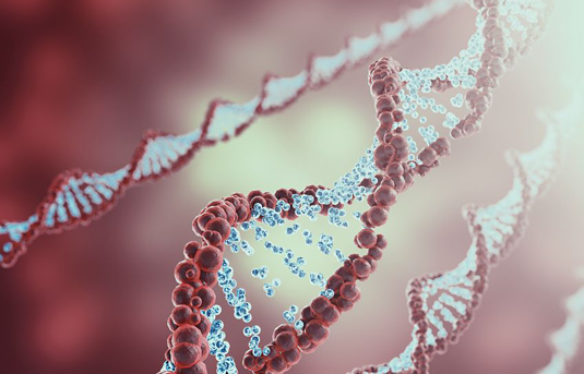 Molecular hairpin structures make effective DNA replicators