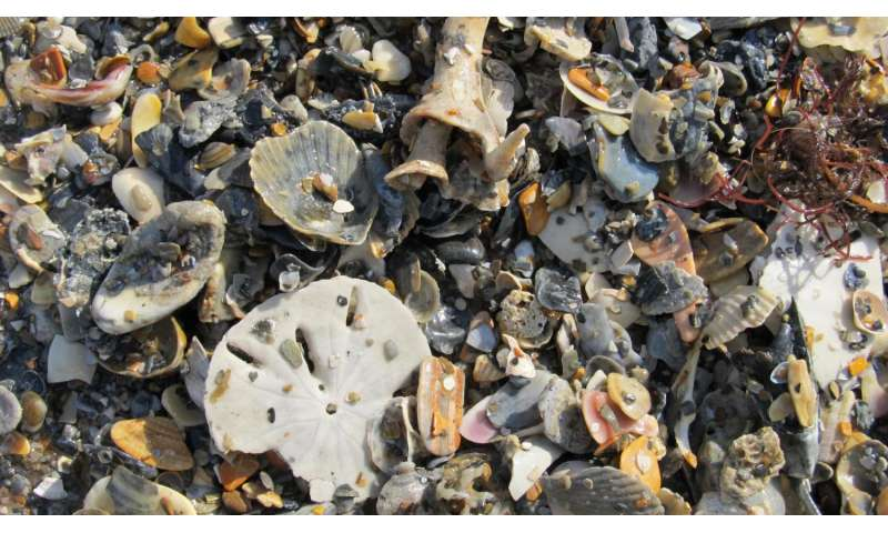 Mollusk graveyards are time machines to oceans' pristine past