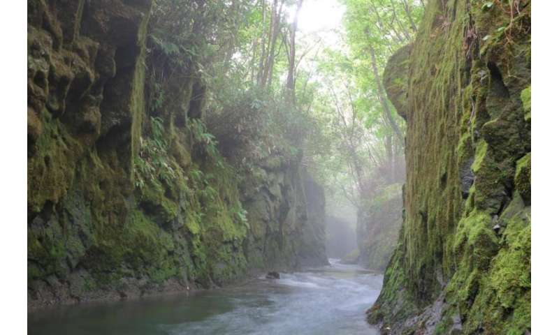 Mosses used to evaluate atmospheric conditions in urban areas