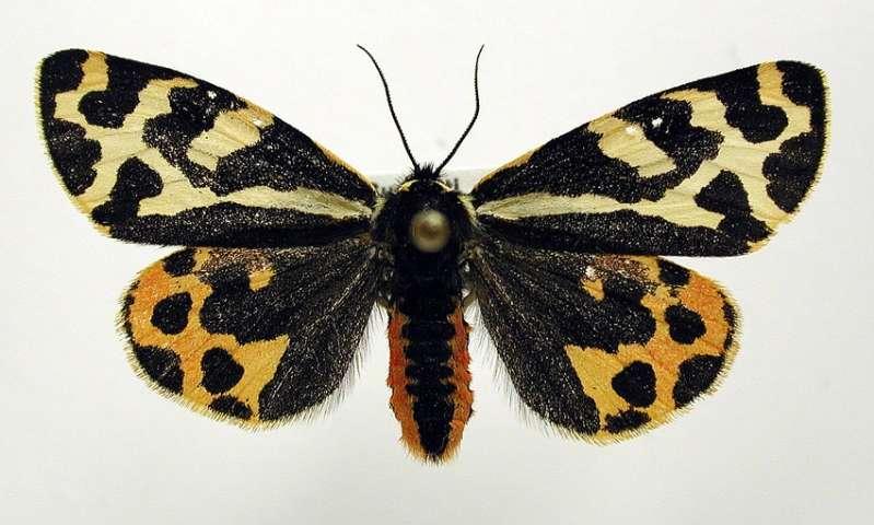 Moth found to secrete distinct defensive fluids to ward off different types of predators