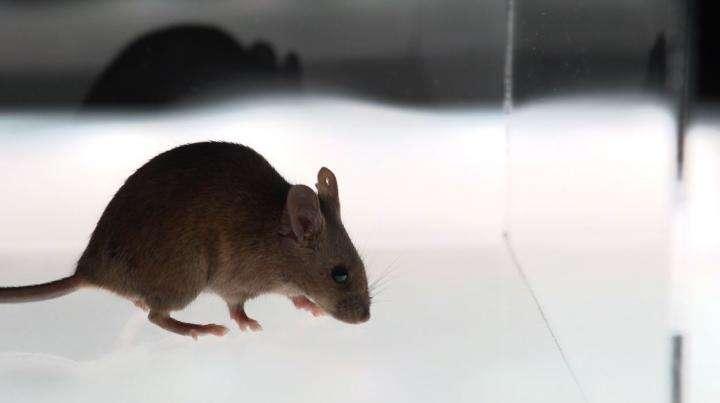 Mouse arrest