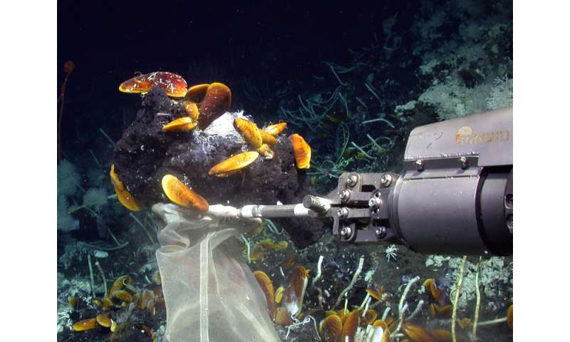Mussels and sponges in the deep sea can thrive on oil with the help of symbiont bacteria
