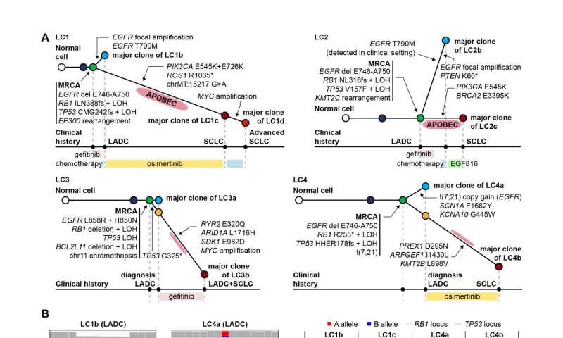 Mutations unveiled that predispose lung cancers to refractory histologic transformation