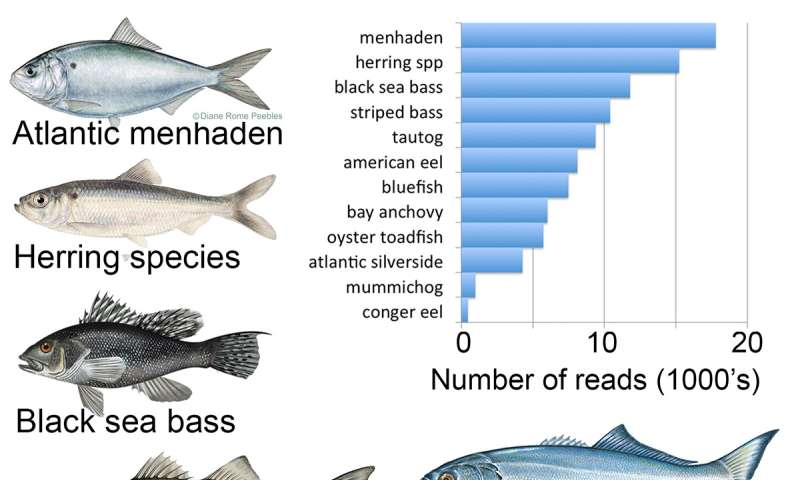 Naked DNA in water tells if fish have arrived