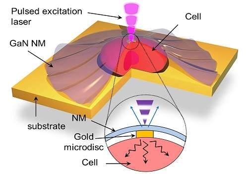 Nano-sized sensors provide unprecedented data on how heat diffuses in and out of living cells