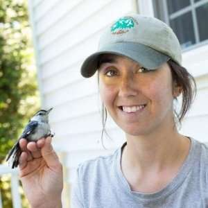 Native trees, shrubs provide more food for birds