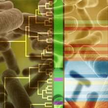 Nature demonstrates how bacteria degrade lignin and provides better understanding to make biofuels