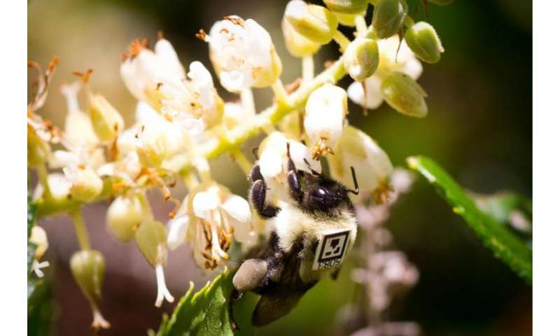 Neonicotinoid pesticide affects foraging and social interaction in bumblebees