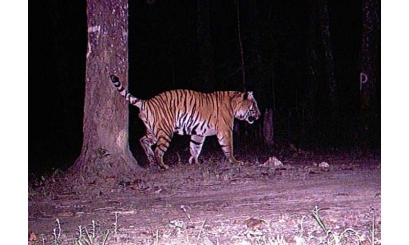Nepal on target to meet aim of doubling tiger population by 2022