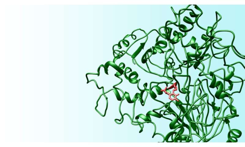 New amino acid may lead to progress on major maladies