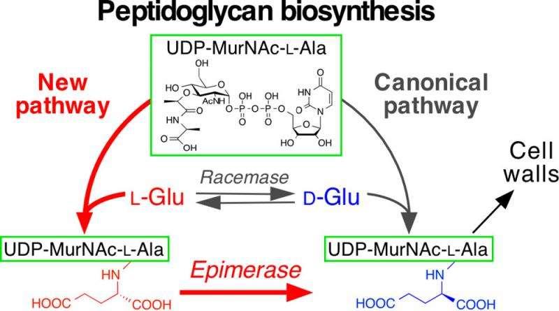 New biosynthetic pathway unique to pathogenic microorganisms