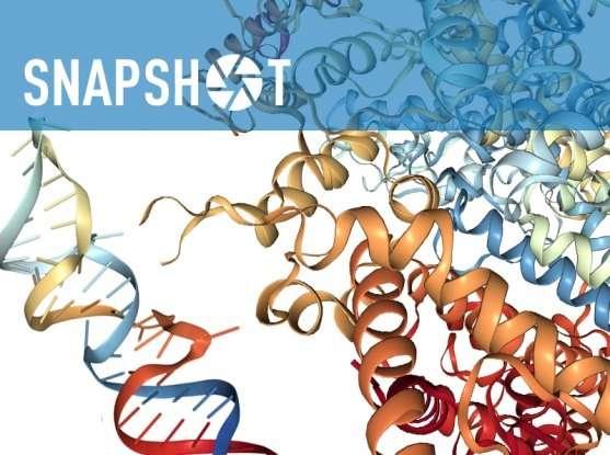 New CRISPR tool targets RNA in mammalian cells