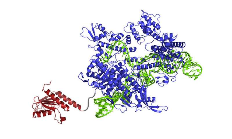 New enzyme rewrites the genome