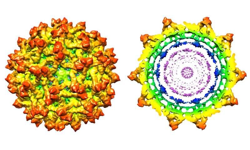 New findings detail structure of immature Zika virus