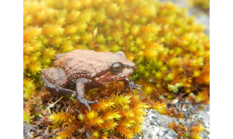 New frog from the Peruvian Andes is the first amphibian named after Sir David Attenborough