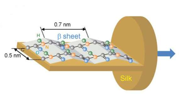 New infrared imaging technique reveals molecular orientation of proteins in silk fibres