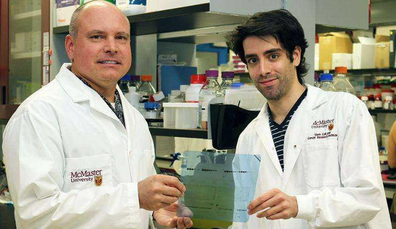 New insights made into cellular signalling pathway linked to cancer and other diseases