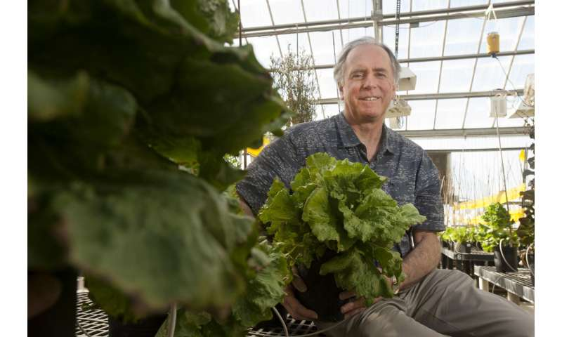 New lettuce genome assembly offers clues to success of huge plant family
