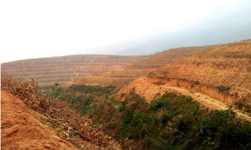 New look at satellite data questions scale of China's afforestation success
