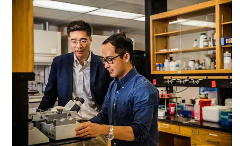 New method of isolating tumor cells could improve cancer research and treatment