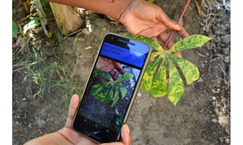 New mobile app diagnoses crop diseases in the field and alerts rural farmers