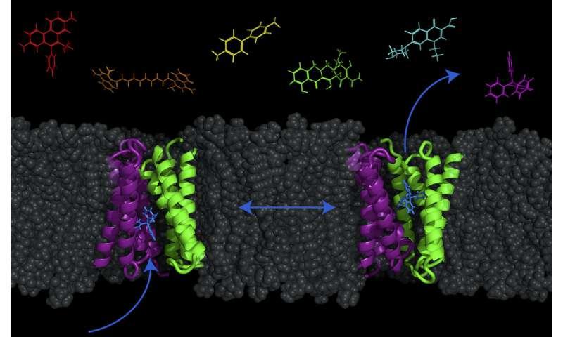 New model reveals possibility of pumping antibiotics into bacteria