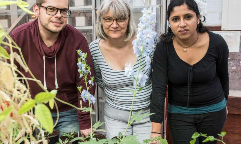 New plant research solves a colorful mystery
