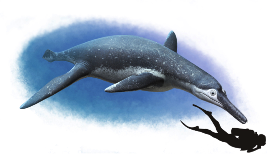 New species of bus-sized fossil marine reptile unearthed in Russia