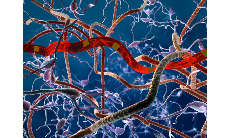New, ultra-flexible probes form reliable, scar-free integration with the brain