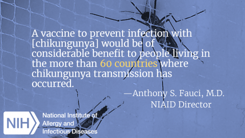NIAID-sponsored trial of experimental Chikungunya vaccine begins