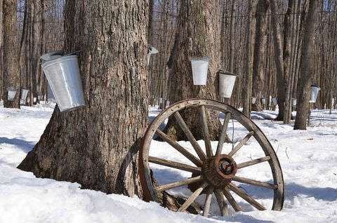 NIST metrology and the maple syrup industry
