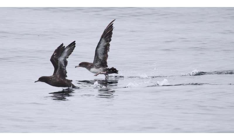 Nonresident seabirds forage along the continental shelf break in Central California