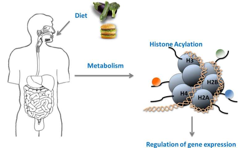Novel histone modifications couple metabolism to gene activity